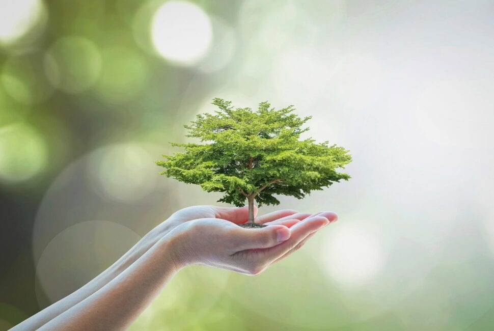 An effective environmental management system is critical for organisations needing to measure, manage and improve their environmental impact.
